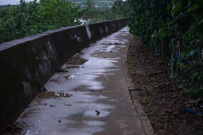 台風後の堤防沿いは。