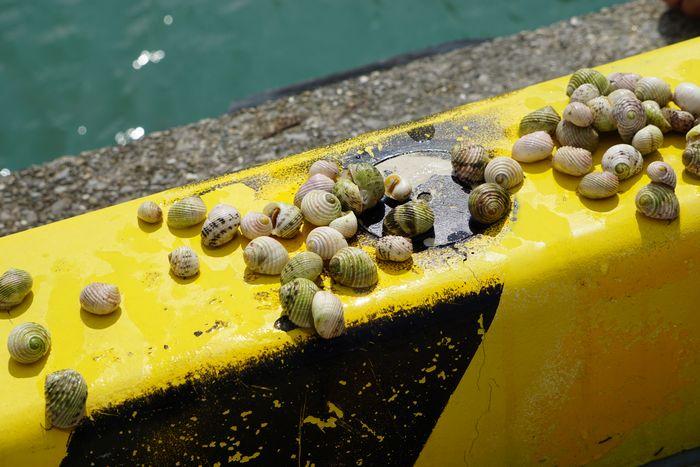 貝を集めて楽しんでいました