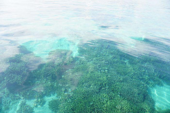 水底のサンゴにお魚さん♪