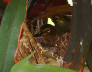 メジロの巣が事務所入り口の扉の横に