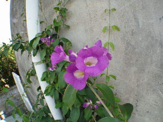 経過観察中のお花。咲きました!