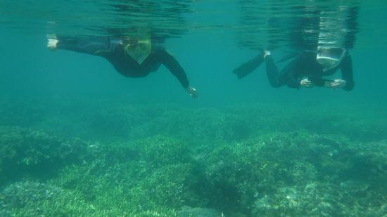 慣れた泳ぎで水中世界を満喫です。