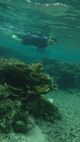 マイタケサンゴも思いっきり楽しめましたね