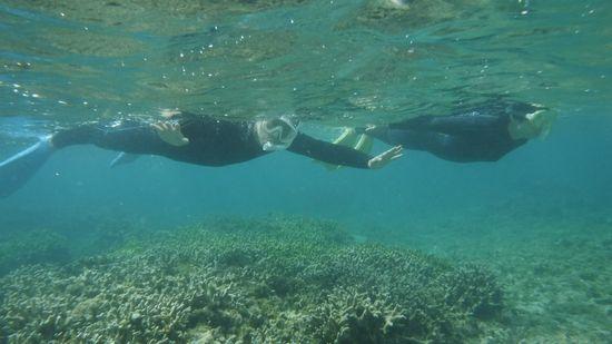 余裕のポーズですいすい泳いでいます