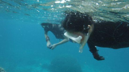 すいすい泳ぎまわっています!