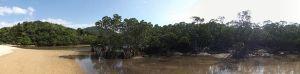 ふらっと寄って楽しめるマングローブの観光スポット 吹通川 アクティビティにカヌーも