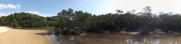 マングローブが生い茂る吹通川