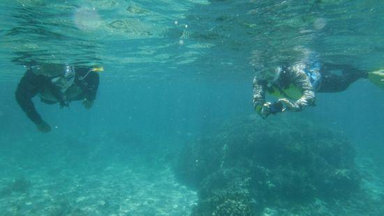 すいすい泳ぐK端さんご夫婦です。