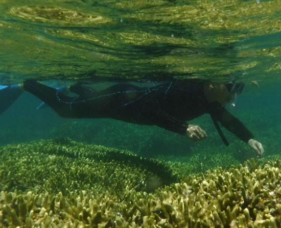 慣れてくると楽勝の泳ぎの旦那さんです。