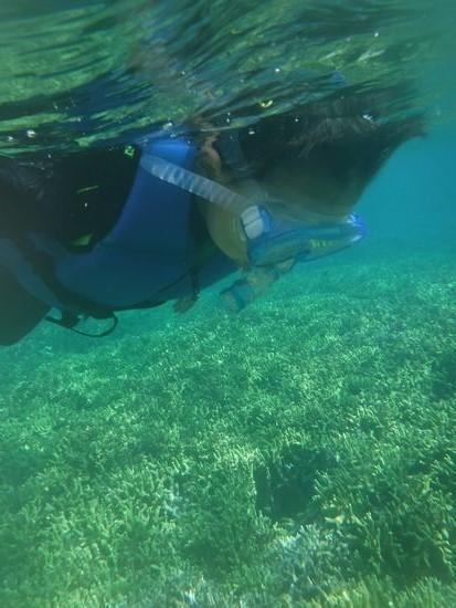 アスキ君しっかり泳いでいますアスク君です。