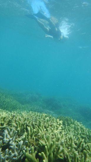 A田さんは、ハイスピードで泳ぎます
