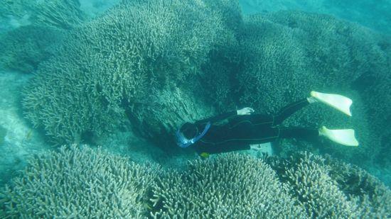 サンゴの隙間を素潜りドボンです。