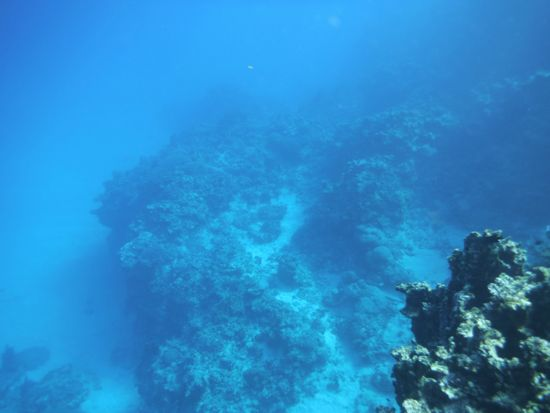 水底は砂地になって30mくらいの深さです
