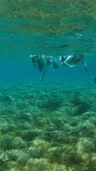 サンゴを楽しむI居さんご夫婦です