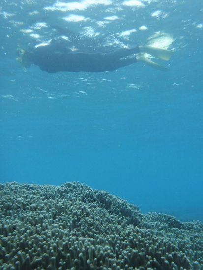 水中の透明度は抜群です