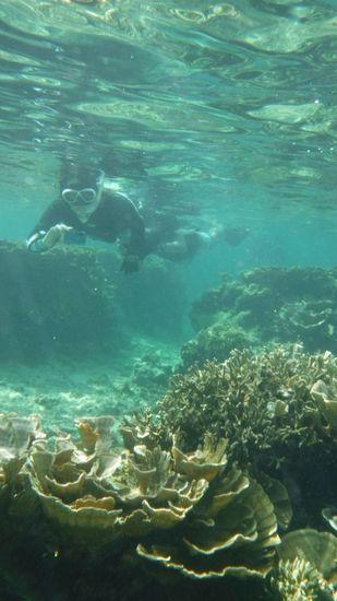 マイタケサンゴの登場です。