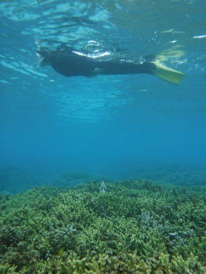 サンゴの上をすいすい泳いでいます。
