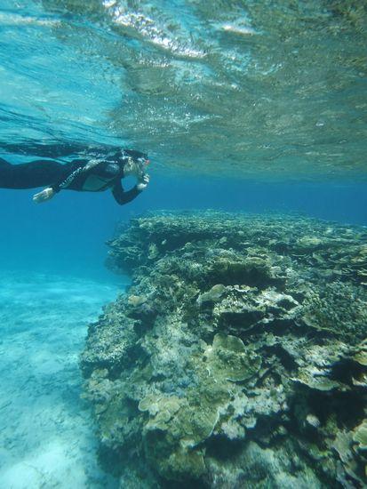 マイタケサンゴとM井さん