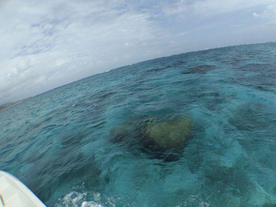 今日もクリアーな海です