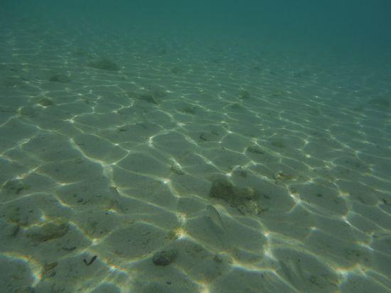 砂地に隠れるお魚さん