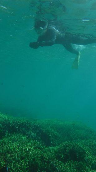水中撮影に没頭のN辺さんです。