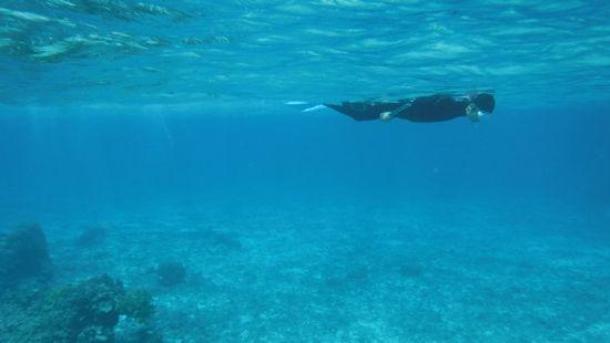 慣れた泳ぎです