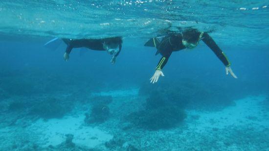 すいすい泳ぐY山さんご夫婦です。