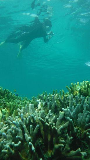 サンゴを楽しむY下さんです。
