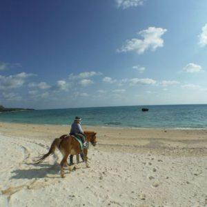 ハッピーにまたがり、ビーチを乗馬体験♪