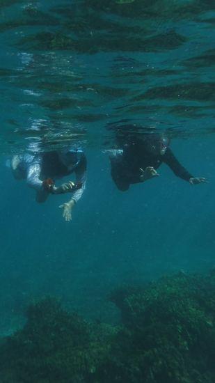 常に寄り添って泳ぐY野さんご夫婦です。