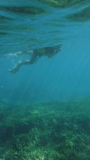 太陽の光を浴びながら、すいすい泳ぐK藤さん