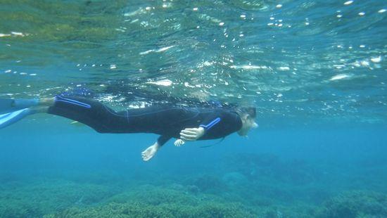 パワフルな泳ぎの旦那さんです