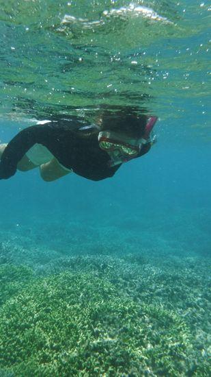 とっても安定した泳ぎです。