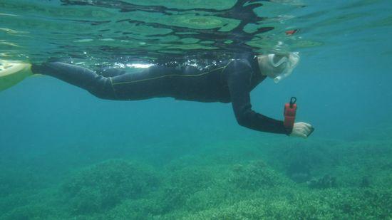すいすい泳ぐお母さんです。