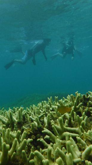 色ブダイの幼魚を指差しているM島さんです。