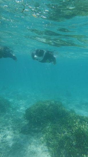 最後のフリータイムでは、すいすい泳ぐお姉さんです。