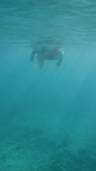 西日が差し込んで水中は神々しいです。