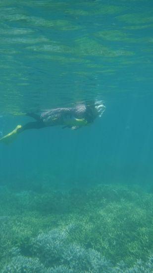 お母さんの泳ぎもスマートです。
