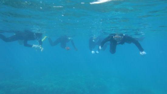 エントリーとともにすいすい泳ぐ皆さんです。