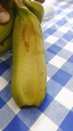 双子のバナナ発見!