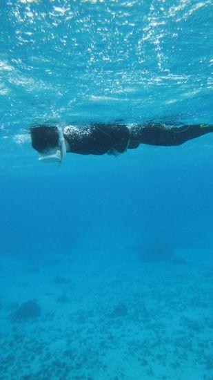 お魚さん好きです!ずっと真下をみて泳いでいます