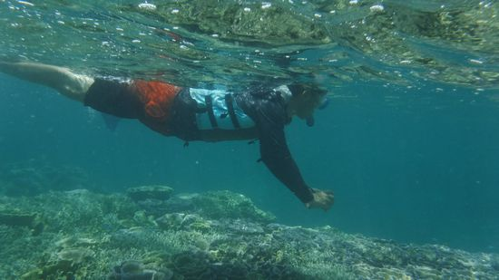 水中写真に没頭のお父さんです。