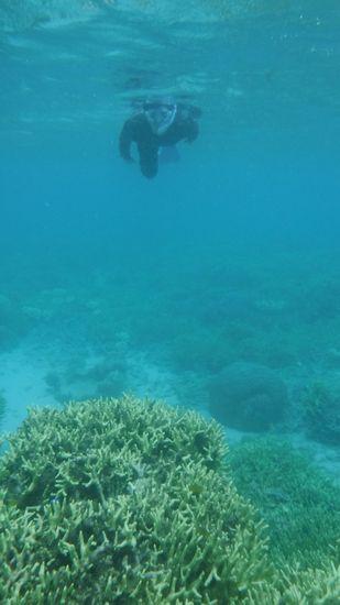 サンゴを楽しんでいる旦那さんです。