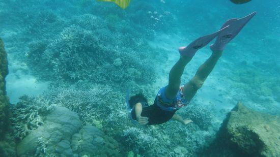 サンゴに向って素潜りのアオト君