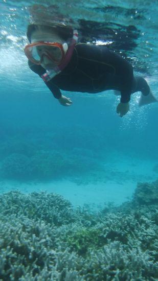 サンゴ、とってもキレイでしたね!