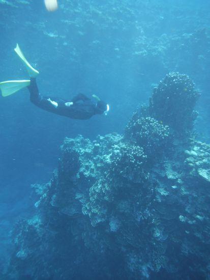 パラオハマサンゴとH井さん
