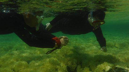 サンゴを楽しんでいるW辺さんご夫婦です。