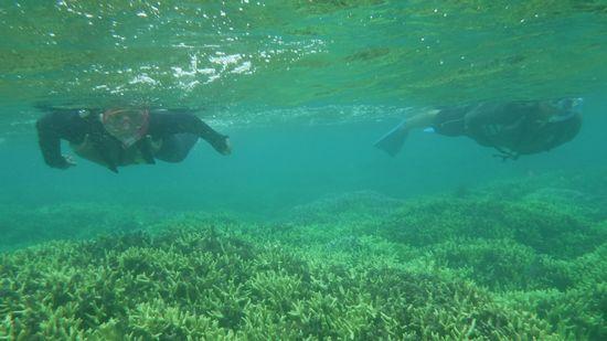 サンゴ群落をすいすい泳ぐT田さんです。