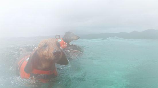 ローサちゃんもネオ君も泳ぎまわっています。