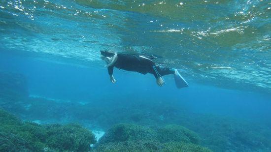 旦那さんもリラックスしながらすいすい泳いでいます